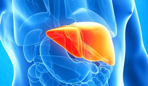 Стеатоз печени – обо всем понемногу