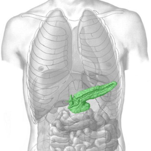 Описание основных функций поджелудочной железы