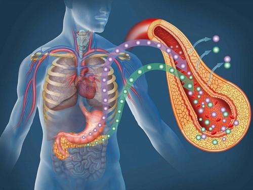 Роль ферментов поджелудочной железы