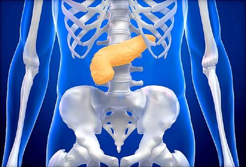 Описание характеристика и функции гормонов поджелудочной железы