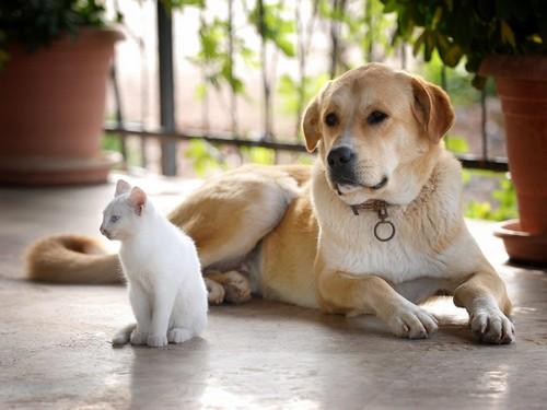 Энтерит не передается от животных к человеку