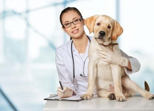 В результате перенесенного вирусного заболевания у животного может пострадать печень и ПЖ